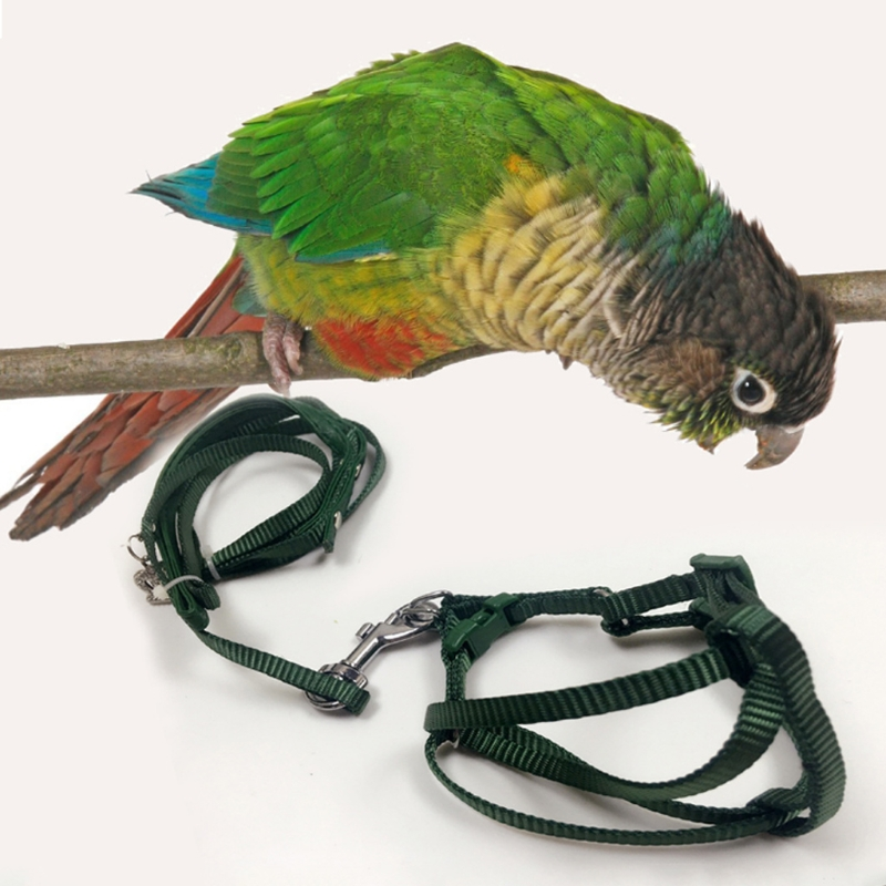 Pet Bird Leash Outdoor Adjustable Harness Training Rope Anti Bite Flying Band parrot lea ...