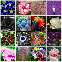 15 Kinds Of Flower Seeds DIY Outdoor Bonsai House Gardening Planting Seeds
