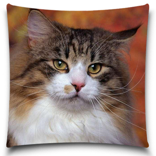 The bearded fat cat Pillow Case of Christmas gift Home Office Decal /Home Textile Gift Pillow Cover 5 size 9 style