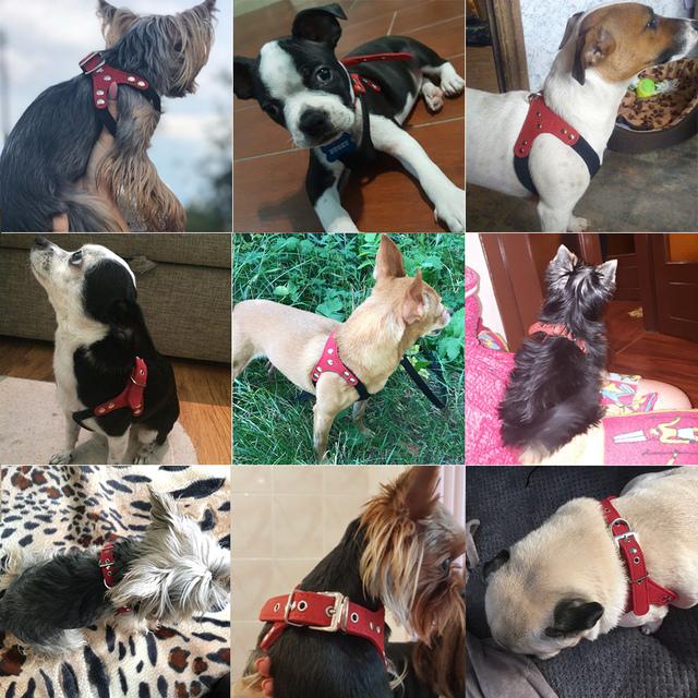 Arnés Ajustable para Perros Pequeños