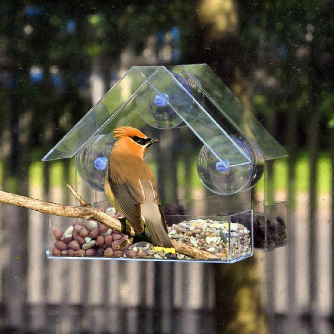 Petforu Plastic House-shaped Outer Bird Feeder Convenient Removable Feeder with Sucker - Transparent