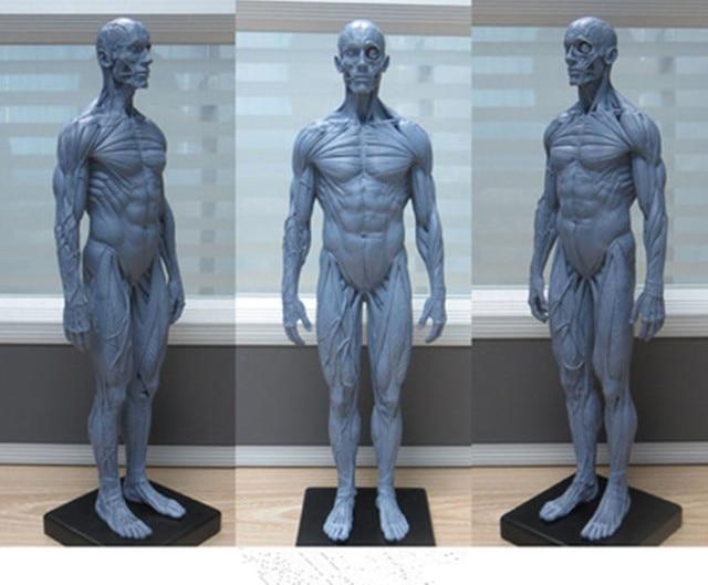 30cm pu human anatomical skeleton for sale anatomical model skull, Skeleton