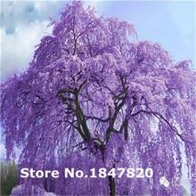 Rare Jacaranda Mimosifolia Bonsai Tree Seeds 500pcs Mix Colors