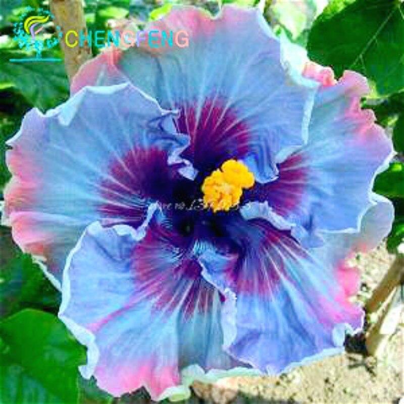 Achetez en Gros hibiscus sac en Ligne à des Grossistes hibiscus ...