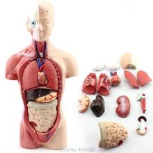 Anatomi Batang 26 Pendidikan