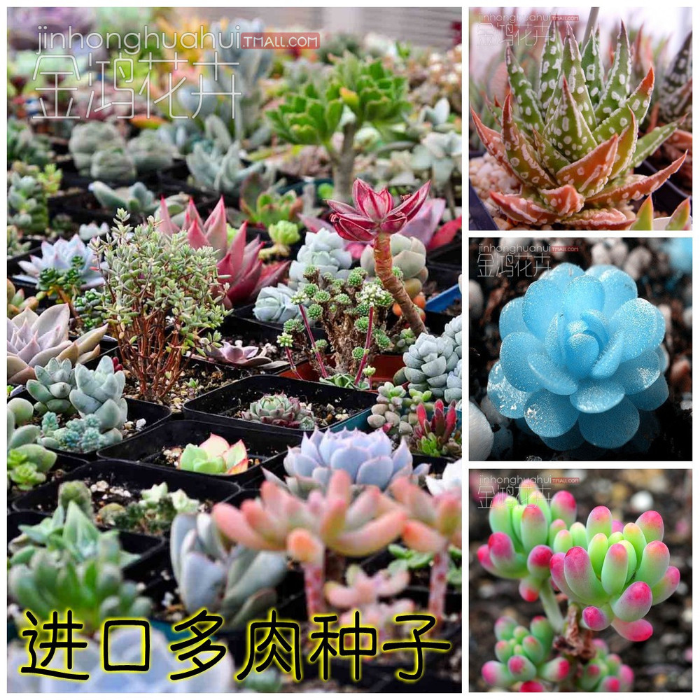 Big Sales!!! 300/bag Mix Succulent seeds lotus Lithops Pseudotruncatella Bonsai plants Seeds for home & garden Flower pots plant