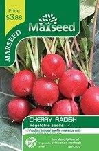 Marseed Non Hybrid 200 Cherry Radish Vegetable Seeds Backyard Garden