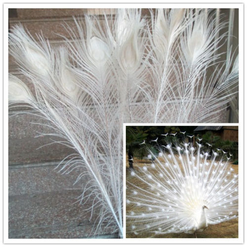 New Free shipping wholesale 100 pcs lot high quality off white peacock feathers 70 80cm 28
