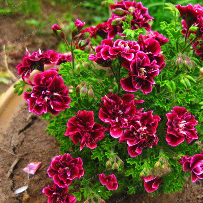 top 10 most popular petals herb list and get free shipping - f6ia6005