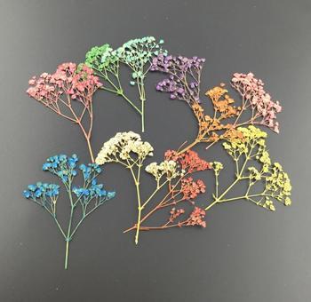 Mini fleur Gypsophila séchée pressée | 100 pièces, pour fête de mariage, pendentif de maison, collier artisanal, accessoires de Bouquet, bricolage