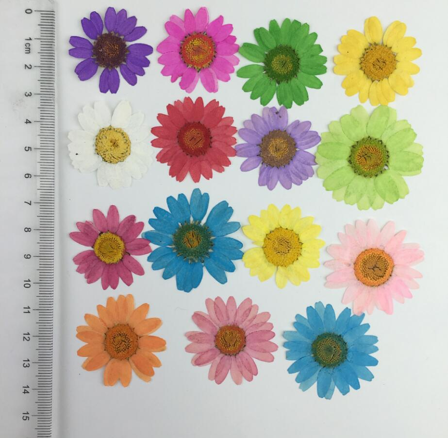 120pcs 25 3cm pressed dried daisy chrysanthemum flower for wedding 120pcs 25 3cm pressed dried daisy chrysanthemum flower for wedding party home pendant necklace craft diy accessories in artificial dried flowers from izmirmasajfo