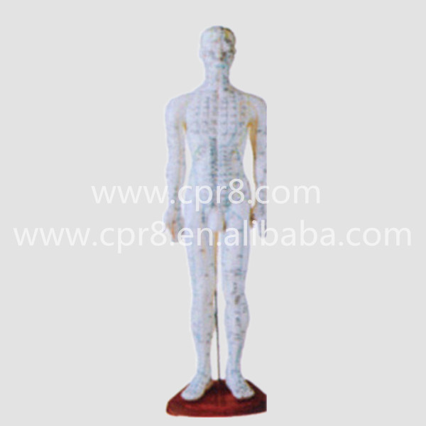 BIX-Y1006 Standard Acupuncture Model (Male) Acupuncture Model Acupuncture Points 60CM W005 22cm head acupuncture point model head acupuncture four function model acupuncture model