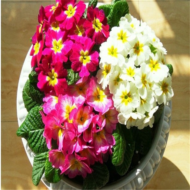 aliexpress  buy  latest beautiful flower seeds beautiful, Beautiful flower