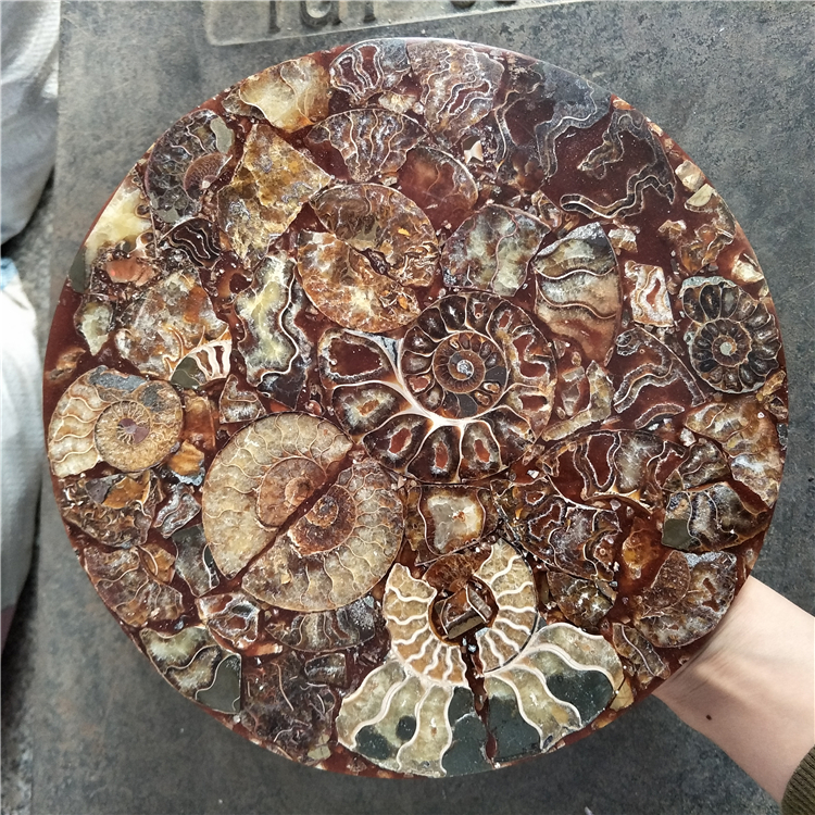 big size beautiful   Ammonite Shell Fossil Disc Madagascar wholesale  ammonite  fossil  fengshui good luck money wealth discbig size beautiful   Ammonite Shell Fossil Disc Madagascar wholesale  ammonite  fossil  fengshui good luck money wealth disc