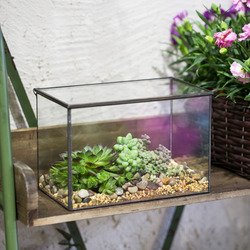 Rectangle Clear Glass Geometric Terrarium Box Tabletop Succulent Fern Moss Plant Micro Landscape Terrarium Bonsai Flower Pot