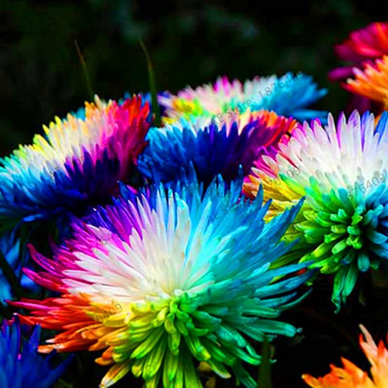 Большая Акция! 200 шт./сумка Хризантема сад Астра цветок бонсай Цветочный ЗАВОД Радуга Хризантема Флорес Многолетние цветы h