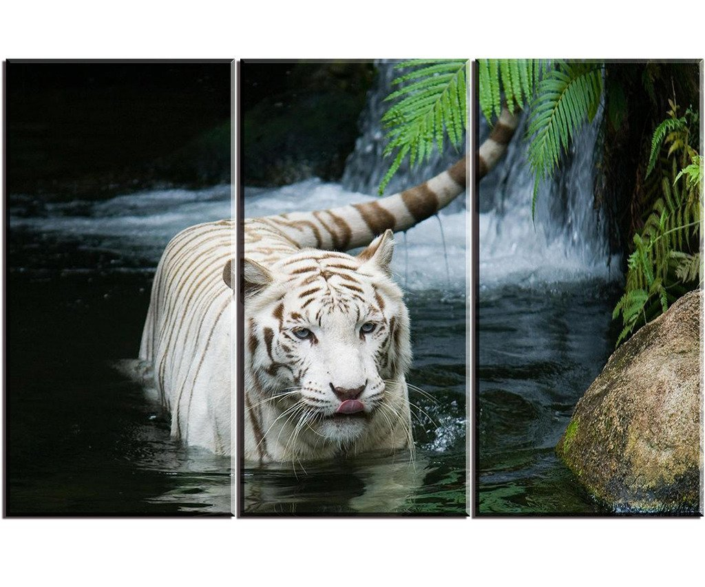 3 Panels White Tiger In The Lake Art Pictures Large Modern
