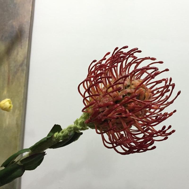 6pcs 63cm Emulation Flower Wholesale Wedding Decoration Artificial Pincushion King Protea Upscale Festival Home Furnishing Arts