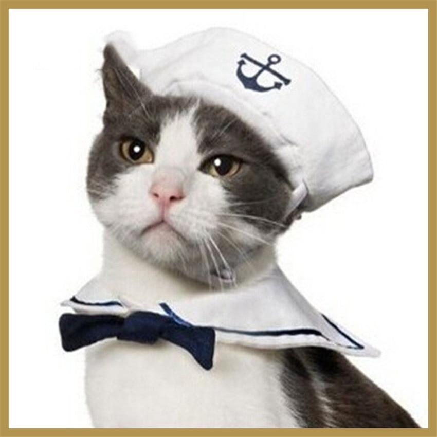 Cat Food Suppliers Uk