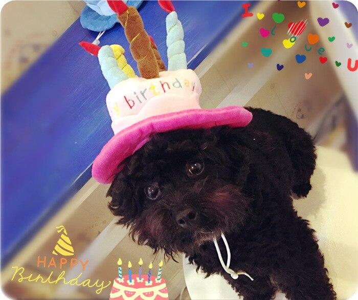 5 unids torta de cumpleaños gorras sombrero mascota para Perros gato ...