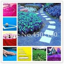 Купить с кэшбэком 500 Pcs Rare Blue Grass Bonsai Evergreen Lawn Plant Rainbow Perennial Flower Garden Soccer Fields Villa High Grade Outdoor Plant