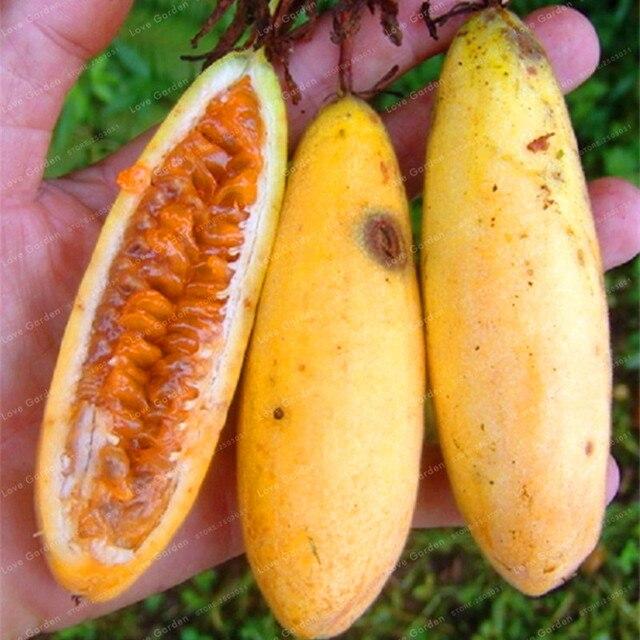 Passiflora Banana pasión fruta bonsái Rosa flor Tropical jardín Passiflora familia jardín interior bonsái flor 50 piezas