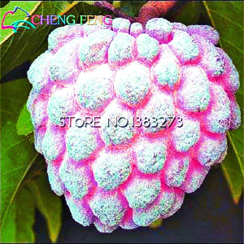 20 Pcs Sweet Soursop Seeds Best Seeds Online Free