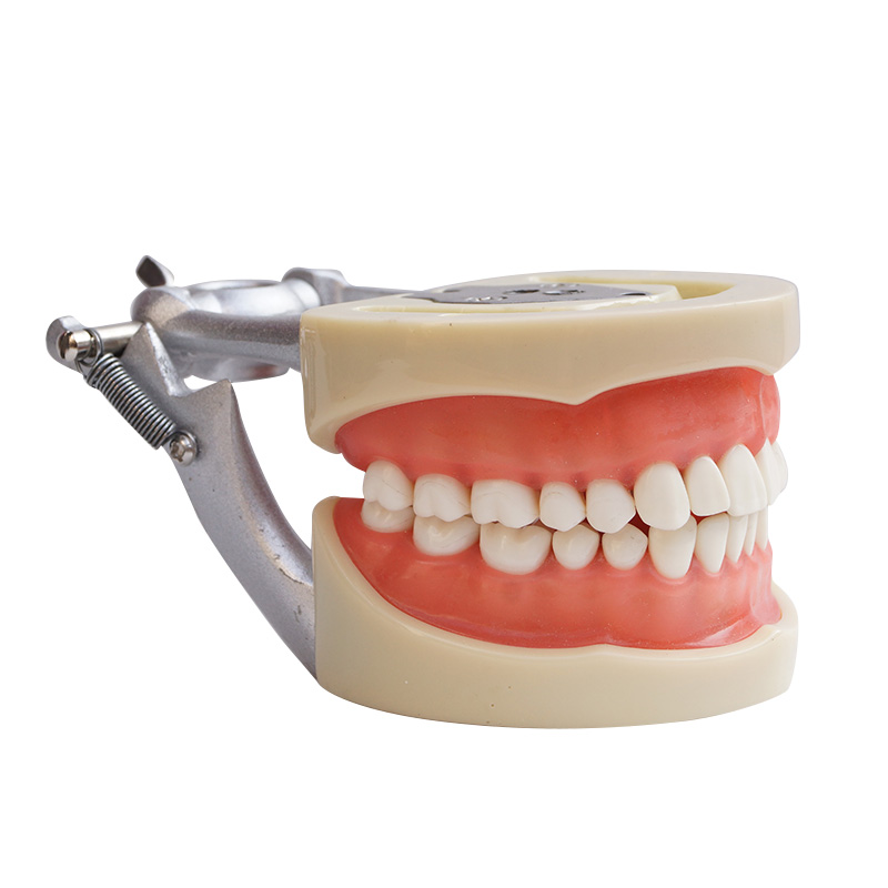 2017 New Arrival Model Dental Universal Plate 200H Type Removable Teeth new arrival high quality dental implant demonstration bracket simulation teeth model teeth removable