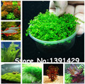 New !!! 1000 Pcs Underwater Aquatic Plants Seeds Moss Aquarium Plant Grass Seeds Fish Tank Landscape Ornamental Decor