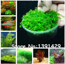 New !!! 1000 Pcs Underwater Aquatic Plants Seeds Moss Aquarium Plant Grass Seeds Fish Tank Landscape Ornamental Decor