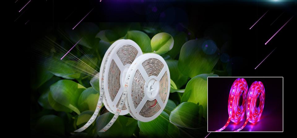 LED Phyto Lamps Strip Light (1)