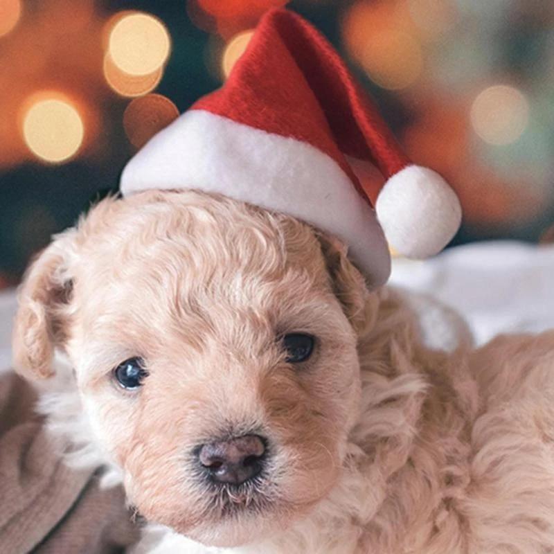 Pet Dog Cat Xmas Santa Hat And Collar With BellsChristmas Xmas New Year Cap  Decorations Dropshipping Dog Caps  - AliExpress