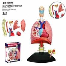 4D легкая интеллектуальная сборная игрушка человеческий орган анатомическая модель медицинская обучающая DIY популярная научная техника