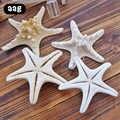 10 pièces 5-8cm étoile de mer naturelle Style méditerranéen bricolage artificiel étoile de mer coquille fête mariage décor à la maison artisanat blanc