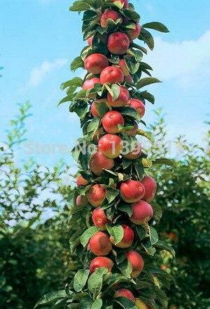 яблоко доставка из Китая