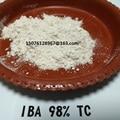 10g regulador del crecimiento vegetal Ácido 3-Indolebutyric (IBA) de Ácido Indol Butírico 98%