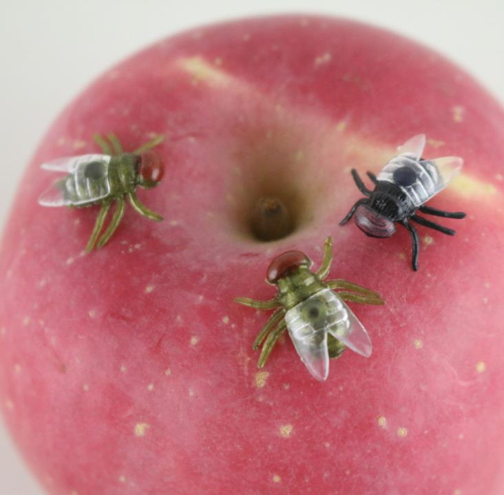 50pcs /lot Prank Funny Trick Joke Special Lifelike Model Simulation Fake Flies Insect Model Halloween Gift