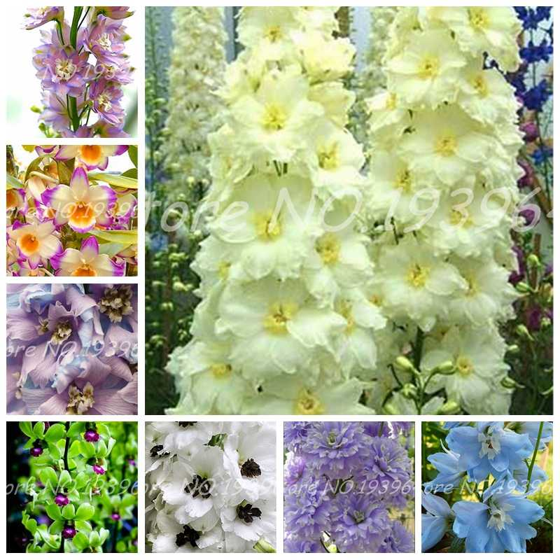 Big Promotion!! 100 Pcs Dendrobium Bonsai, Potted Plant Flower In Bonsai Rare Orchid Plants for Home Garden,The Budding Rate 95%