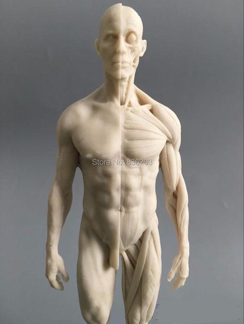 Online-Shop 1:6 30 cm weiß Menschlichen anatomie Männlichen ...