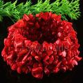"""Бесплатная доставка мода ювелирные изделия стретч переплетения природный красное море коралловый браслет 7 """" 1 шт. H047"""