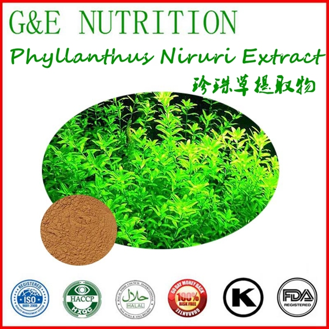 Supply 100% Natural Phyllanthus Niruri Extract powder 100g