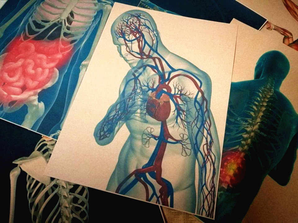 3D X-ray Scanning Human Man Anatomy Retro Kraft Paper Posters Skeletal  Joint Organ Muscular System blue background Wall Sticker