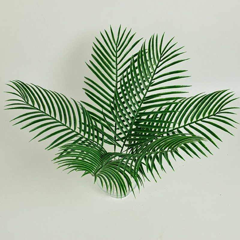 on big leaf house palm tree plant images