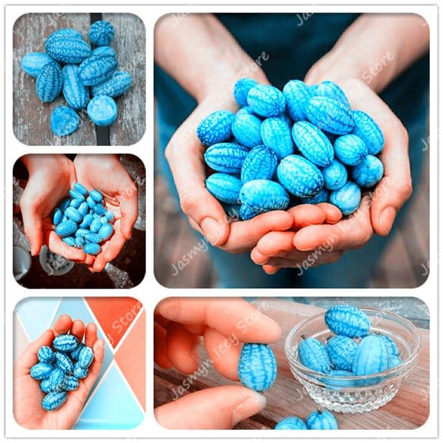 100 шт мини голубой огурец выглядит как Арбузные растения Редкие экологически чистые овощные растения бонсаи Горшечное растение для домашнего сада