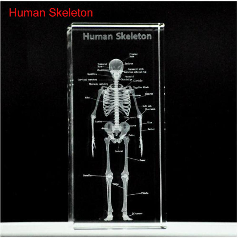 1 Pc/Pack Cool 3D Crystal Inside-Carving Human Model Skeleton For Art Sketch & Anatomy Education
