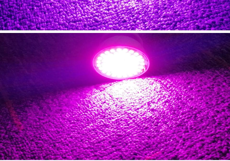 Phyto lamp (11)