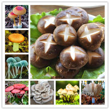 200pcs bag Mushroom Seeds Funny Succlent Plant Edible Health Vegetable 25 Kinds Mushroom Seeds For Happy