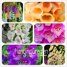 Большая распродажа! 100 шт./лот цветок лисочки бонсай осенние сезоны виды цветов горшечных растений