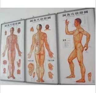 3pcs/sets Human Meridian Acupuncture Point Health Therapy Medical Massage Acupuncture Acupoints Map In Chinese-English