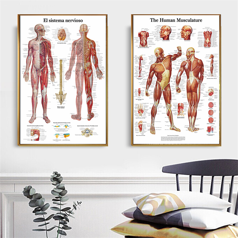 Anatomy Pathology Systems Anatomical Anatomy Charts System Posters And Prints Modern Wall Art Picture Living Room Cuadros Decor